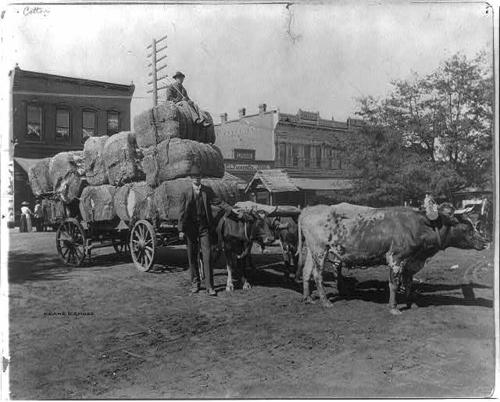 Georgia Farmer