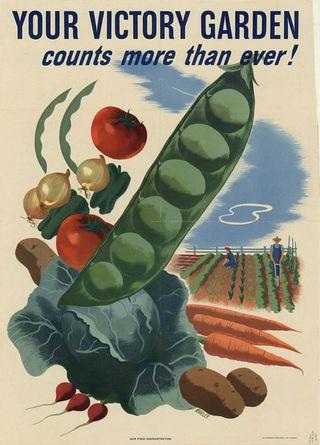 Victory-garden-wikipedia